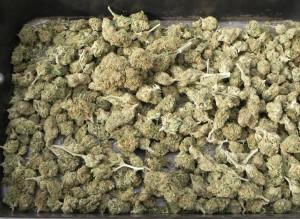 cannabis-2